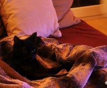Ruby unter der Decke
