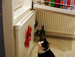Kühlschrank 1 - Verstohlener Blick