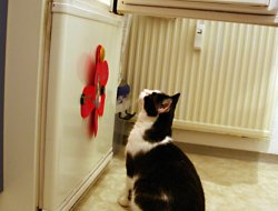 Kühlschrank 2 - Hmmm....