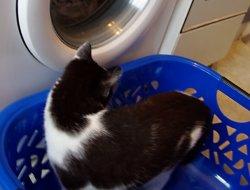 Wäschekorb 2 - Was ist denn da?