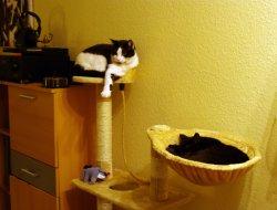 Zwei müde Katzen