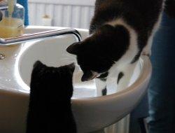 Ruby & Dusty am Wasserhahn