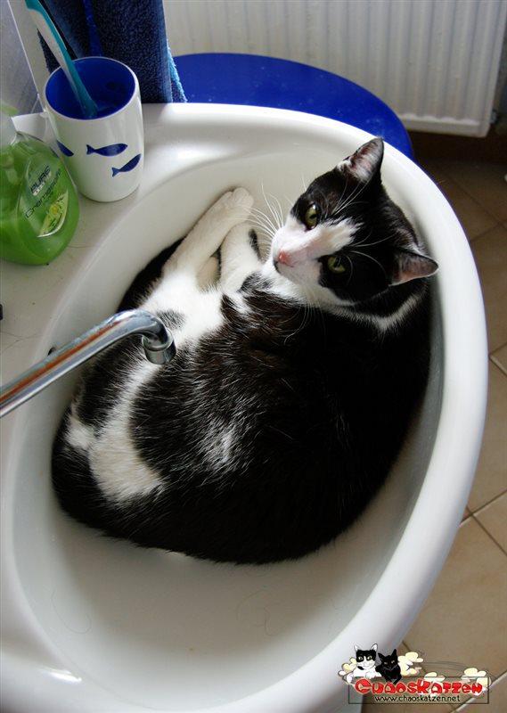 Abkühlung im Waschbecken