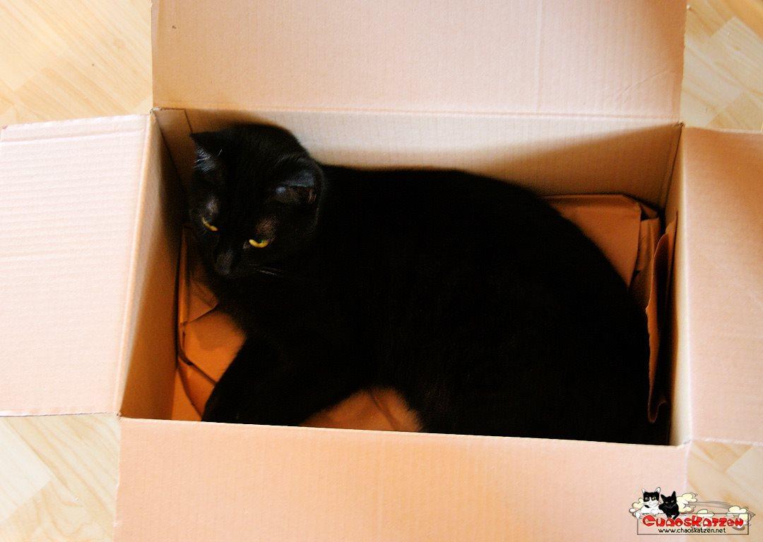 Ruby in der Kiste