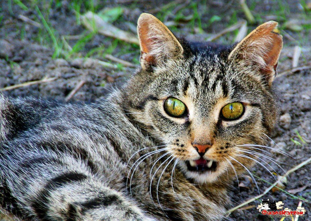 Ignatz' böser Blick