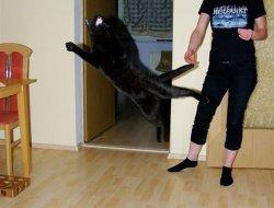Akrobatische Ruby