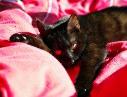Ruby im Bett