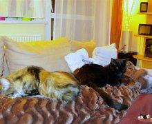 Ruby & Luna