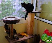 Ruby & Luna auf dem Balkon