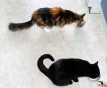 gemeinsam Katzenmilch schlabbern