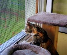 Luna auf dem Balkon