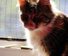Luna am Fenster