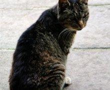 Gartenkatze Minnie
