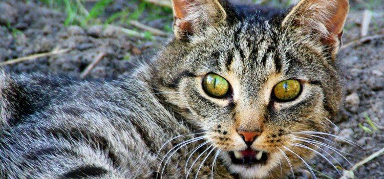 Neue Bilder von den Chaoskatzen